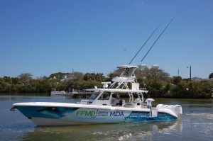 billfish bait